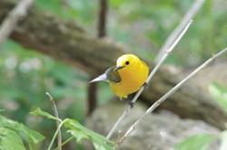 birding5-jack-moore